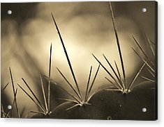 Spiked Acrylic Print