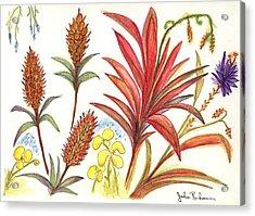 Spiky Florida Flowers Acrylic Print by Julie Richman