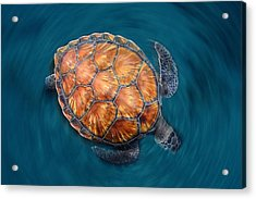 Spin Turtle Acrylic Print by Sergi Garcia