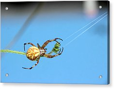 Spinning The Web Acrylic Print