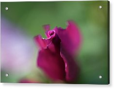 Spinning With Rose 2 Acrylic Print