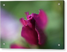 Spinning With Rose Acrylic Print