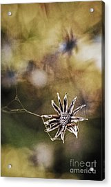 Spinnumwobner Bluetenstand Acrylic Print