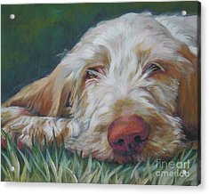 Spinone Italiano Orange Acrylic Print