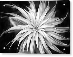Acrylic Print featuring the photograph Spiral Black And White by Christina Rollo