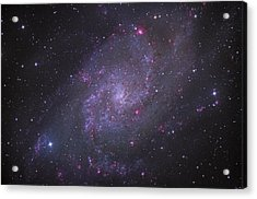 Spiral Galaxy M 33 Acrylic Print by Brian Peterson