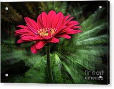 Spiral Pink Flower Focus Acrylic Print