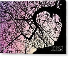 Spiral Tree Acrylic Print