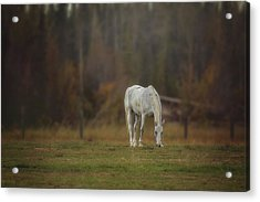 Acrylic Print featuring the photograph Spirit Horse by Debby Herold