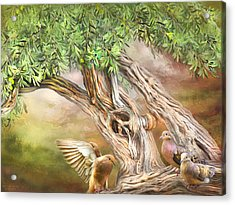 Acrylic Print featuring the mixed media Spirit In The Olive Tree by Carol Cavalaris