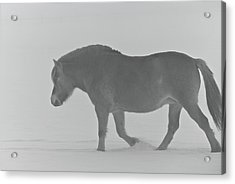 Spirit Acrylic Print by Odd Jeppesen