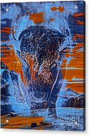 Spirit Of The Buffalo Acrylic Print