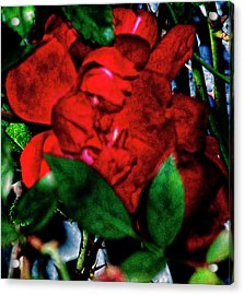 Spirit Of The Rose Acrylic Print by Gina O'Brien
