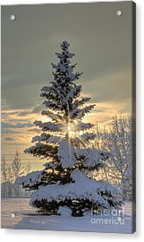 Spirit Tree Acrylic Print by Brad Allen Fine Art