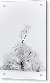 Acrylic Print featuring the photograph Spirit Tree by Dustin LeFevre