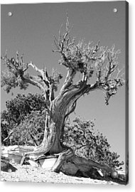 Spirit Tree Acrylic Print