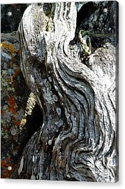 Spirit Tree Root Acrylic Print by Patricia Bigelow
