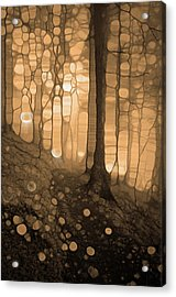 Spirits In The Forest Acrylic Print