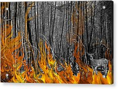 Spirits Of The Firestorm Acrylic Print by Diane C Nicholson