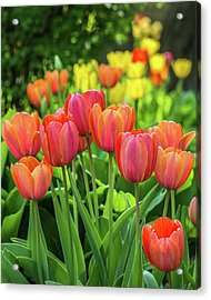 Acrylic Print featuring the photograph Splash Of April Color by Bill Pevlor