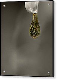 Splash Of Color 2 Acrylic Print by Daniel G Walczyk
