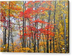 Splash Of Color Acrylic Print by Alan Lenk