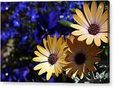 Splash Of Color Acrylic Print