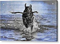 Splashing Fun Acrylic Print