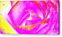 Acrylic Print featuring the mixed media Splendid Rose Abstract by Will Borden