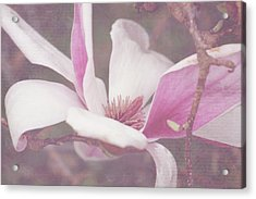 Acrylic Print featuring the photograph Splendid Tulip Tree  by Toni Hopper