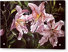 Splendor In Pink Acrylic Print by Alfred Ng