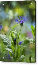 Splendor In The Garden Acrylic Print by Belinda Greb