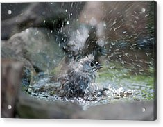 Splish Splash Acrylic Print by Dan Friend