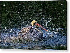 Acrylic Print featuring the photograph Splish Splash by HH Photography of Florida