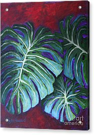 Split Leaf Philodendron Acrylic Print by Phyllis Howard