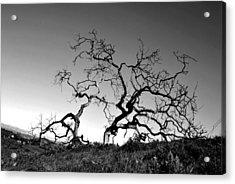 Split Single Tree On Hillside - Black And White Acrylic Print