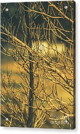 Spooky Country House Obscured By Vegetation  Acrylic Print