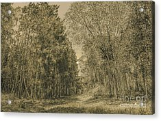 Spooky Old Woods Acrylic Print by Jorgo Photography - Wall Art Gallery