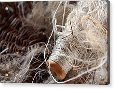 Acrylic Print featuring the photograph Spool Of Wool by Joanne Coyle