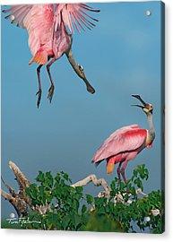 Spoonbills Greeting Acrylic Print by Tim Fitzharris