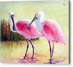 Spoonbills Acrylic Print by Judy Mercer