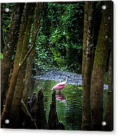 Spooning Acrylic Print by Marvin Spates