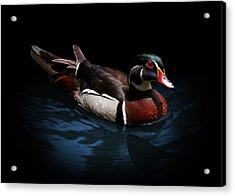Spotlight On A Wood Duck Acrylic Print
