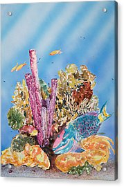 Spotlight Parrotfish Acrylic Print by Tanya L Haynes - Printscapes