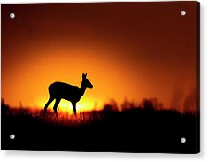 Spotlight Acrylic Print