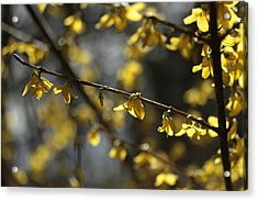 Acrylic Print featuring the photograph Spotlights  by Connie Handscomb