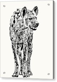 Spotted Hyena Full Figure Acrylic Print