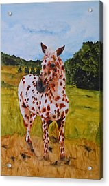 Spotted In Hawaii Acrylic Print by Jean Blackmer