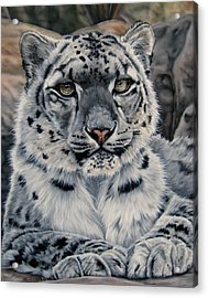 Spotted Acrylic Print