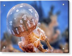 Acrylic Print featuring the photograph Spotted Lagoon Jellyfish by Anthony Citro